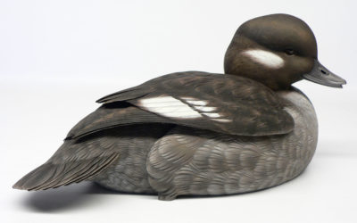 Bufflehead hen decorative decoy by Jason Lucio