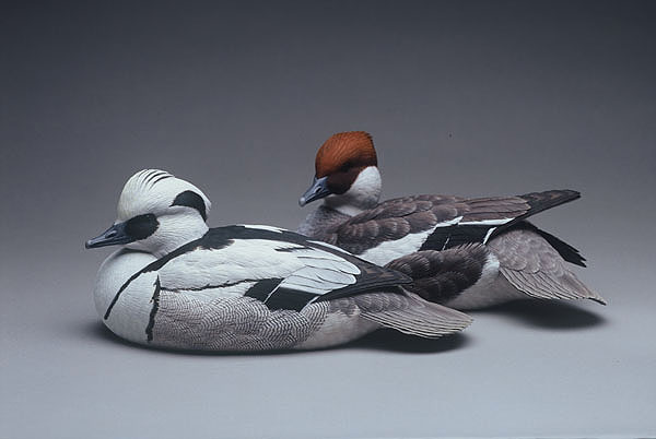 Smew decorative decoy pair carving by Jason Lucio