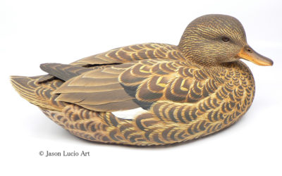 Gadwall-hen decorative decoy by Jason Lucio