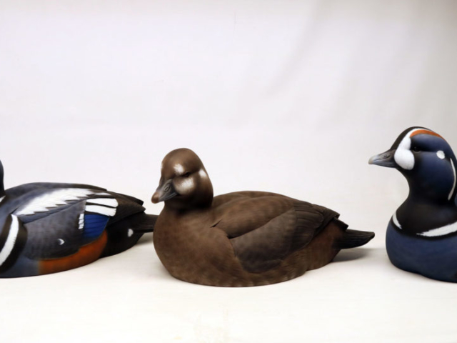 Harlequin Duck decoy rig by Jason Lucio