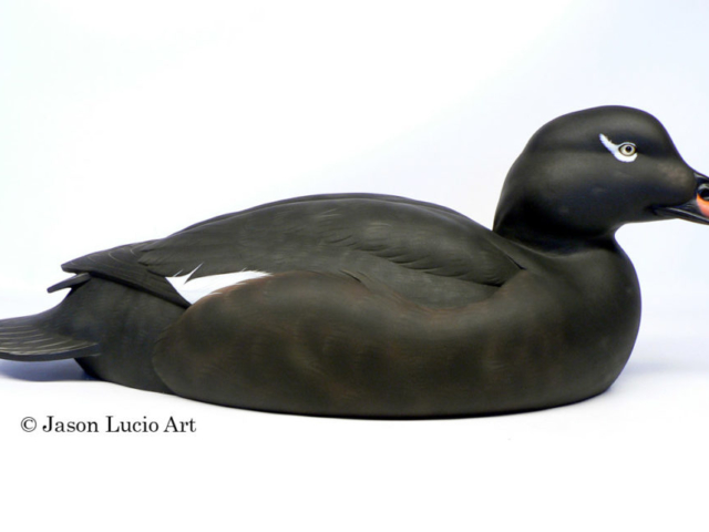White-winged Scoter drake duck decoy by Jason Lucio