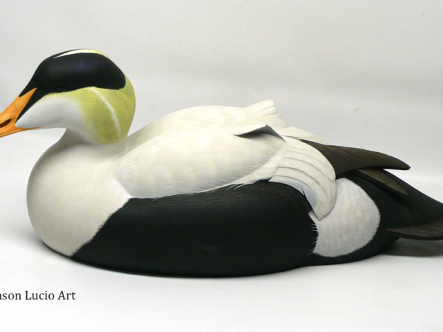 Pacific Eider duck decoy by Jason Lucio