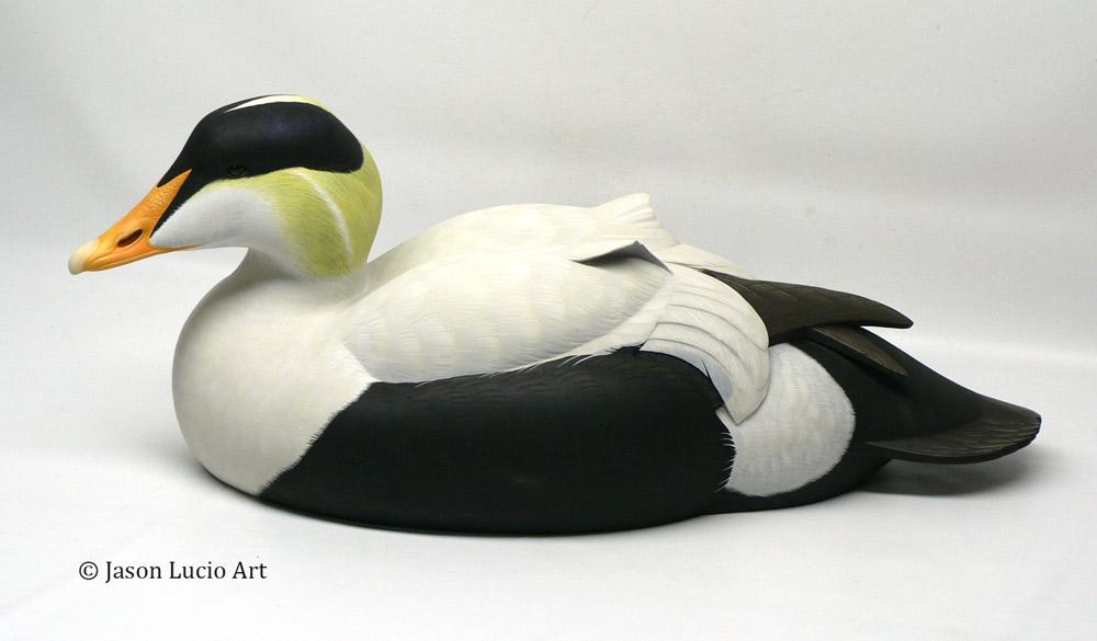 Pacific Eider duck decoy by Jason Lucio