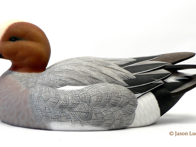 Eurasian Wigeon duck decoy by Jason Lucio