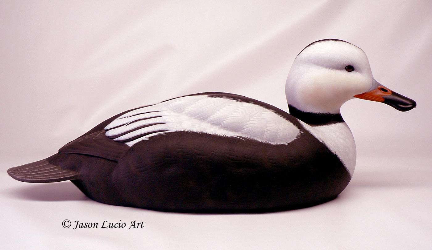 Labrador Duck drake duck decoy by Jason Lucio