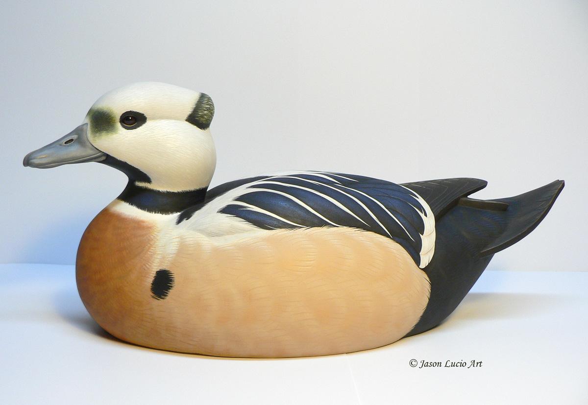 Steller's Eider duck decoy by Jason Lucio