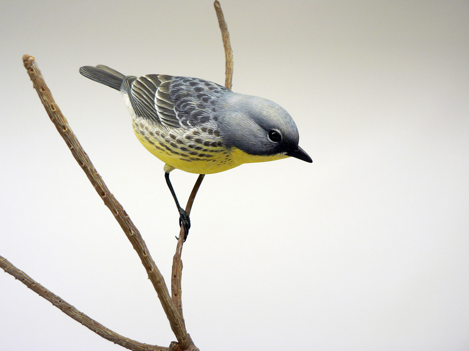 Kirtland's Warbler female by Jason Lucio