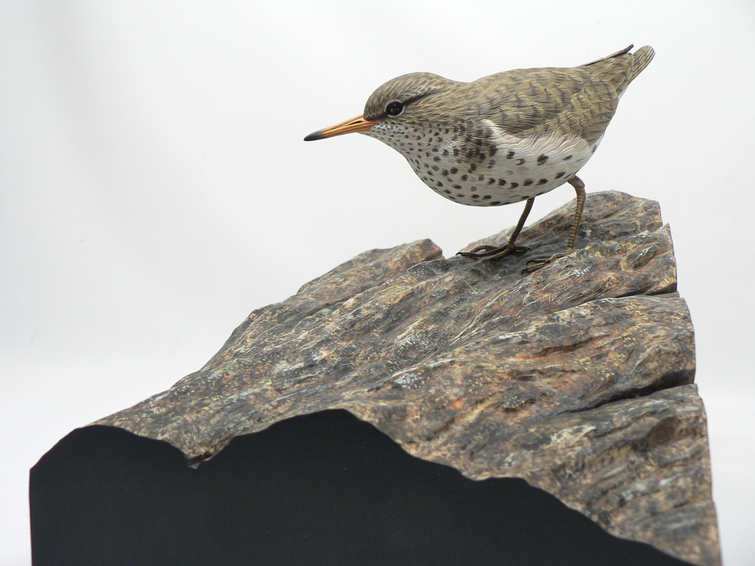 Spotted sandpiper carving by Jason Lucio