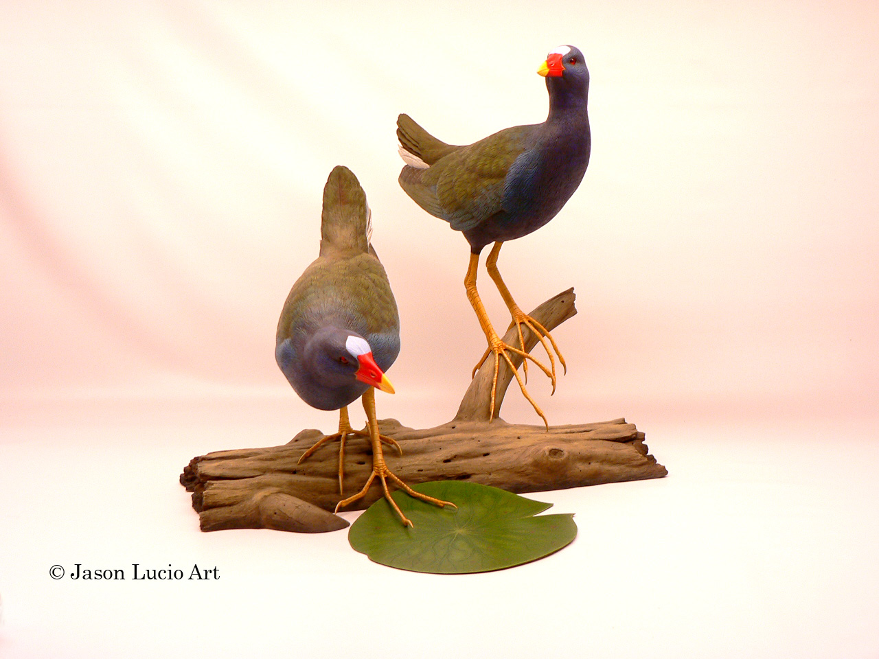 Purple Gallinules by Jason Lucio